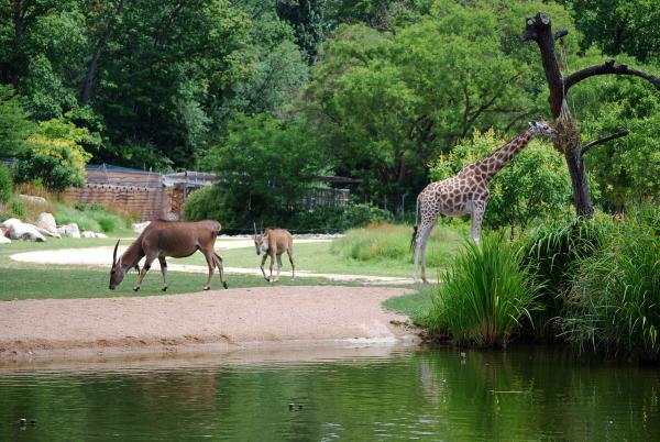 Plaine africaine, Zoo de Lyon - Parc de la Tête d'Or © Ville de Lyon